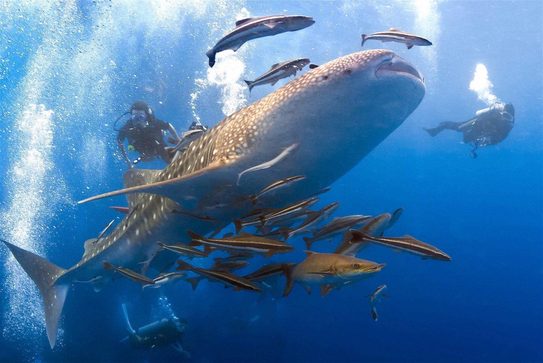 www.thefunkyturtle.com-scuba-diving
