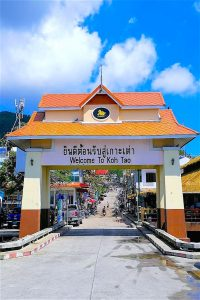 thefunkyturtle.com welcome to koh tao island