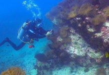 thefunkyturtle.com dive sites south west pinnacle koh tao