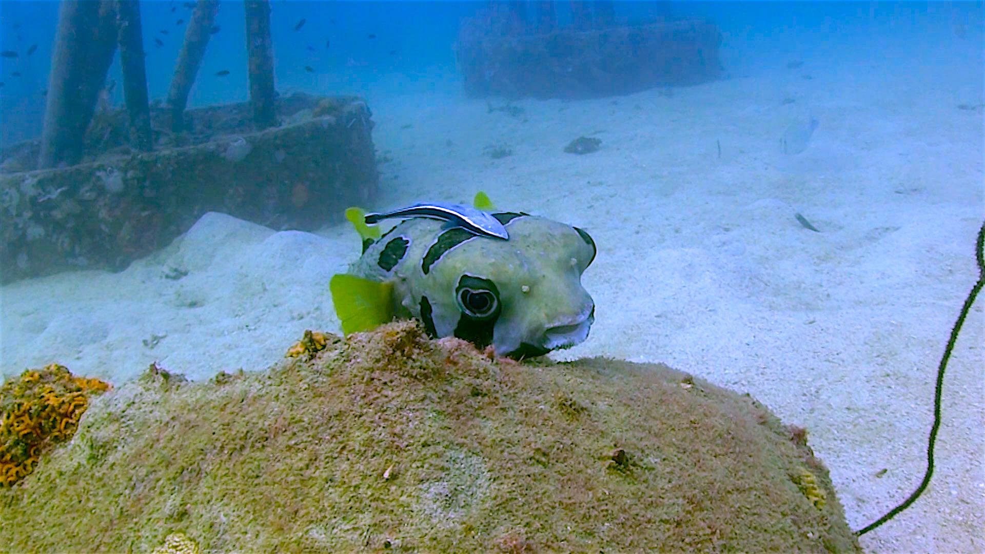 www.thefunkyturtle.com Buoyancy world dive site