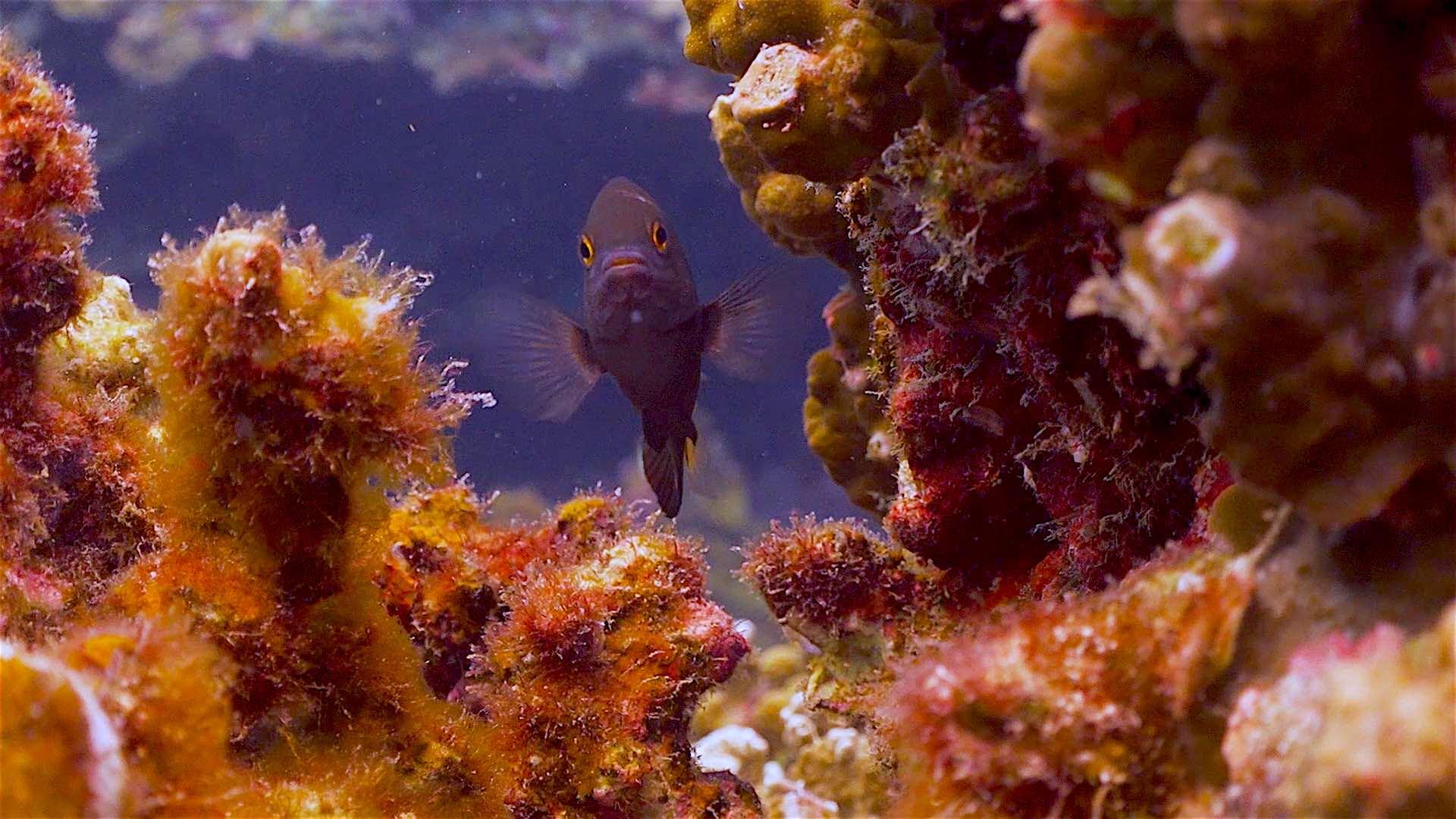 www.thefunkyturtle.com Mango Bay dive site koh tao beautiful coral reefs
