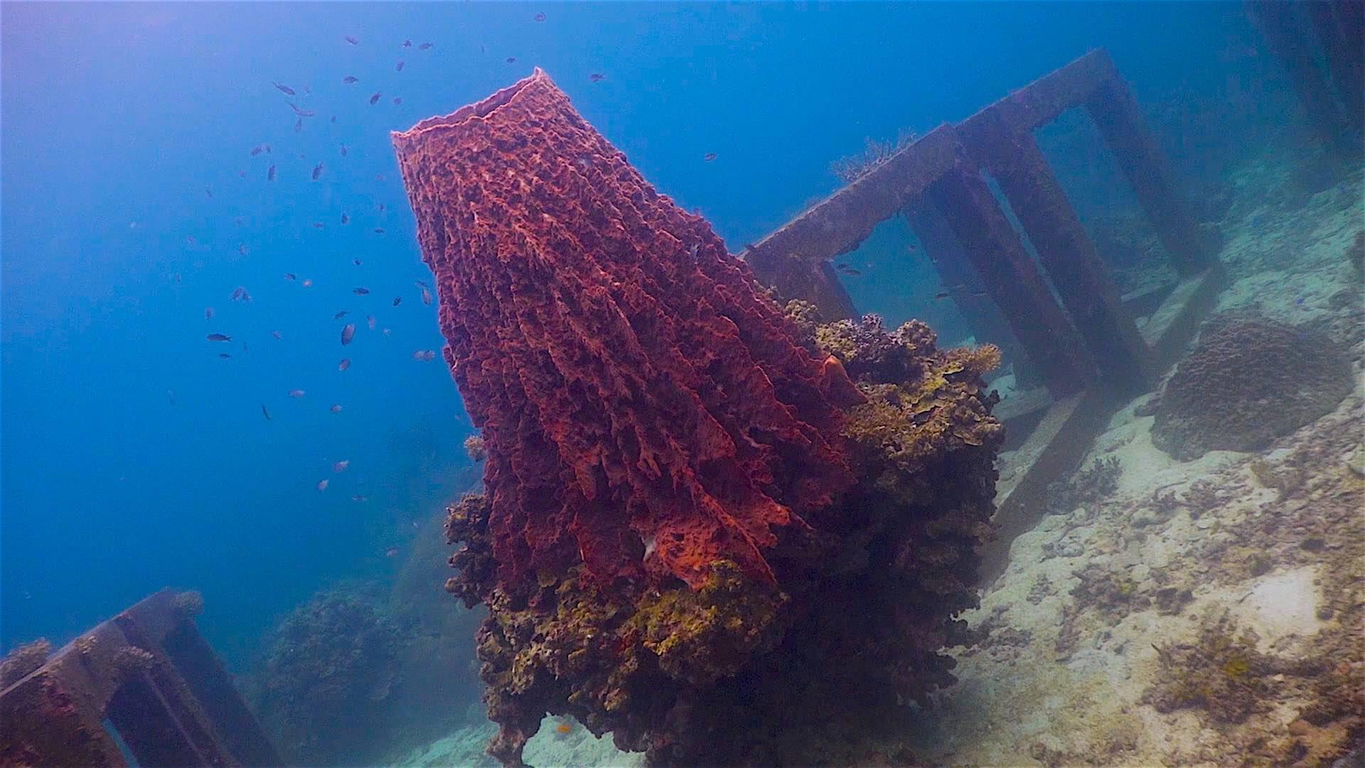 www.thefunkyturtle.com Mango Bay dive site koh tao coral diversity