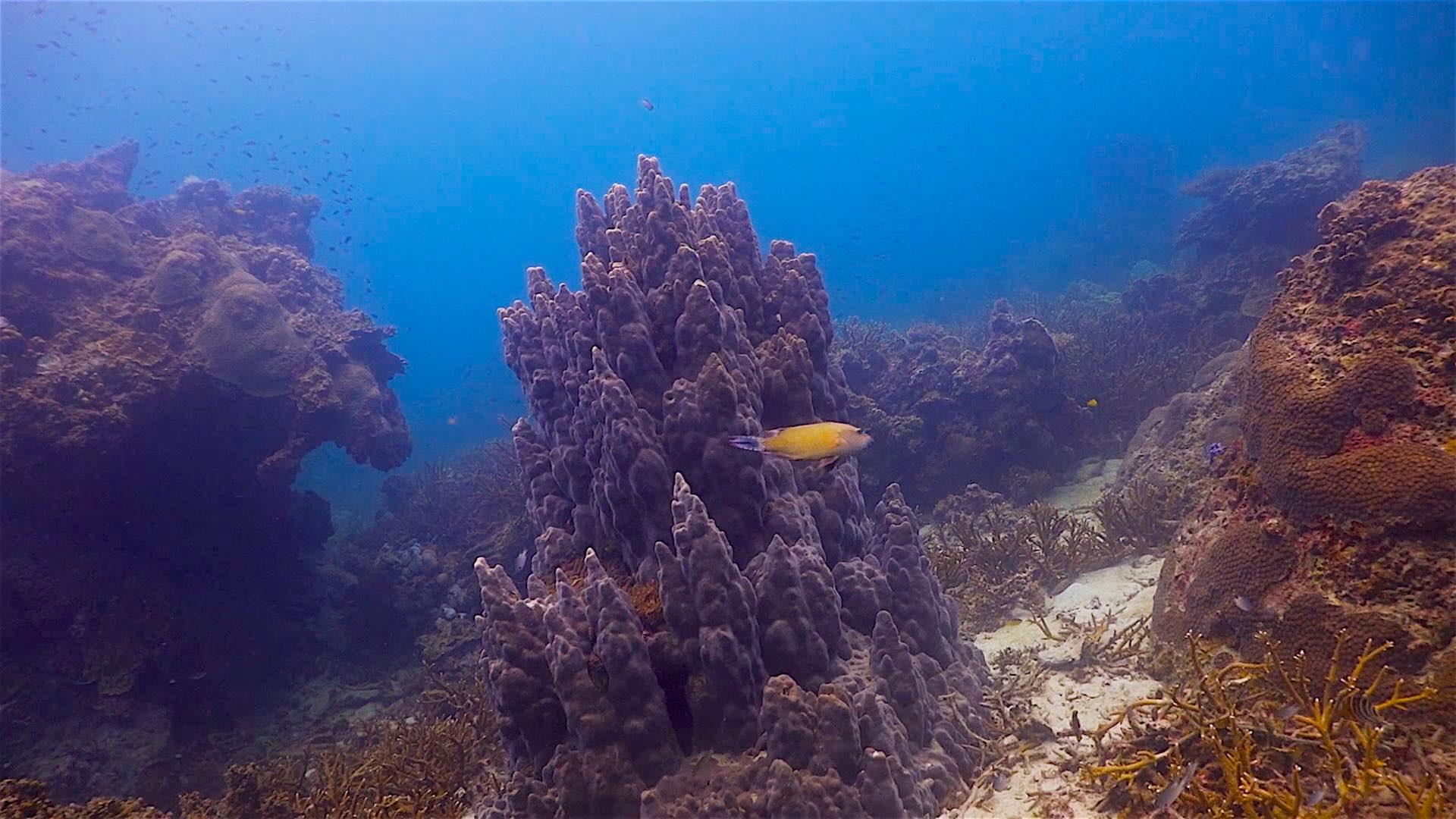 www.thefunkyturtle.com Mango Bay dive site koh tao coral reefs