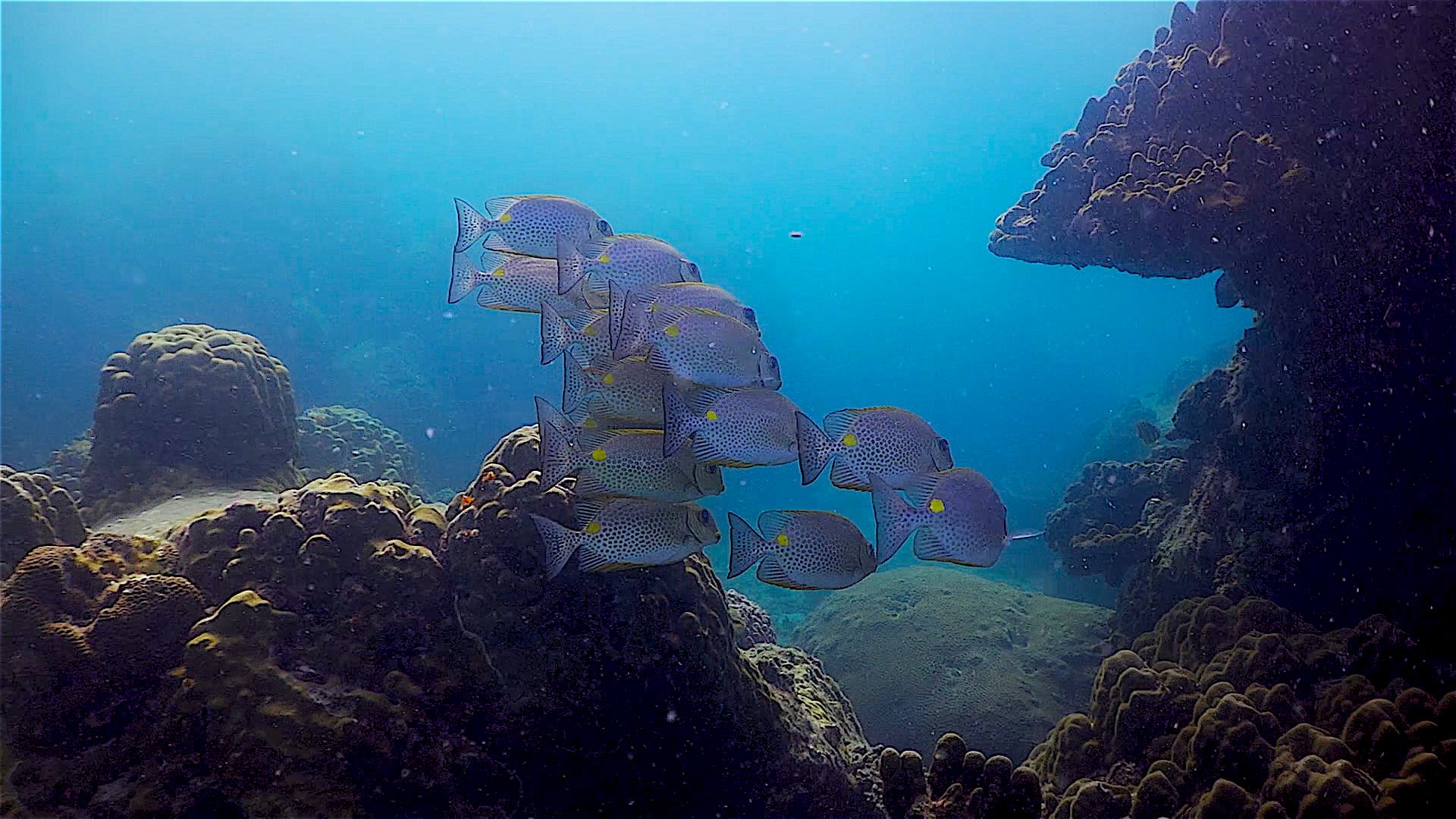 www.thefunkyturtle.com Three Rocks and Pottery dive site koh tao marine life