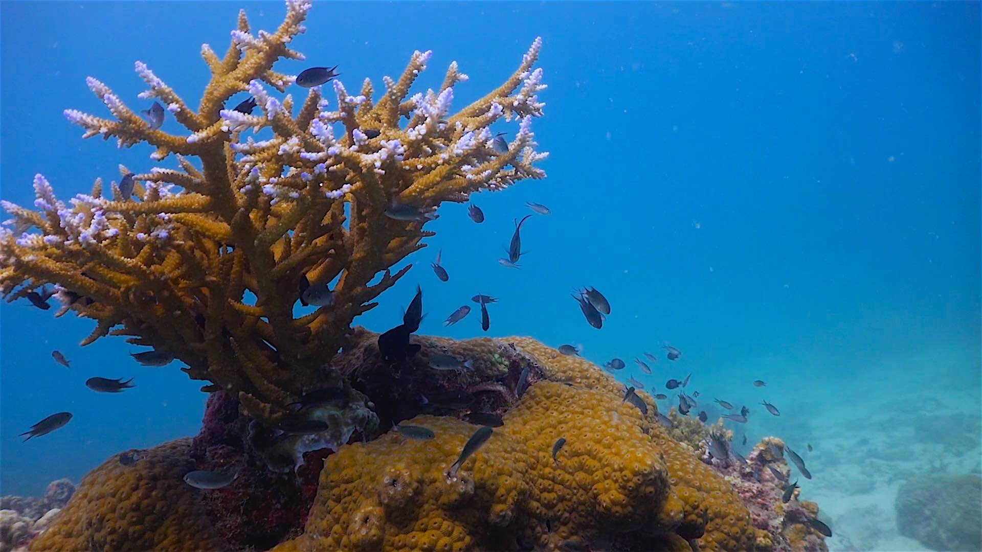 www.thefunkyturtle.com aow leuk stag coral reef koh tao