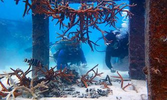 Artificial Coral Reef Restoration Koh Tao