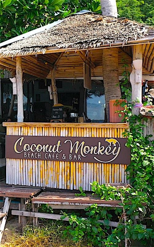 Coconut Monkey Koh Tao