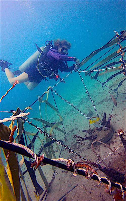 thefunkyturtle.com-coral-and-artificial-reef-restoration-on-koh-tao