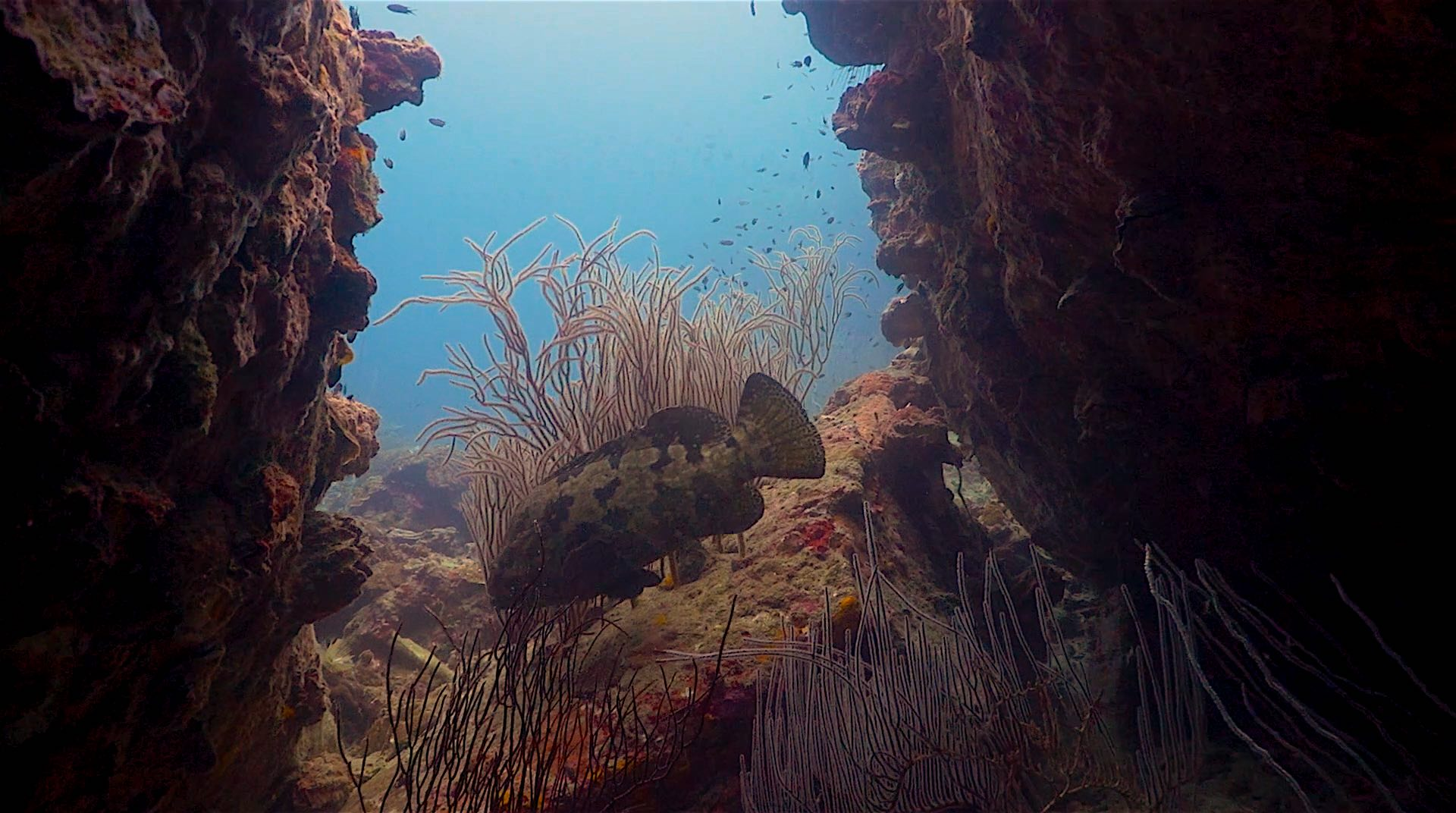 www.thefunkyturtle.com hin wong dive site koh tao coral reefs