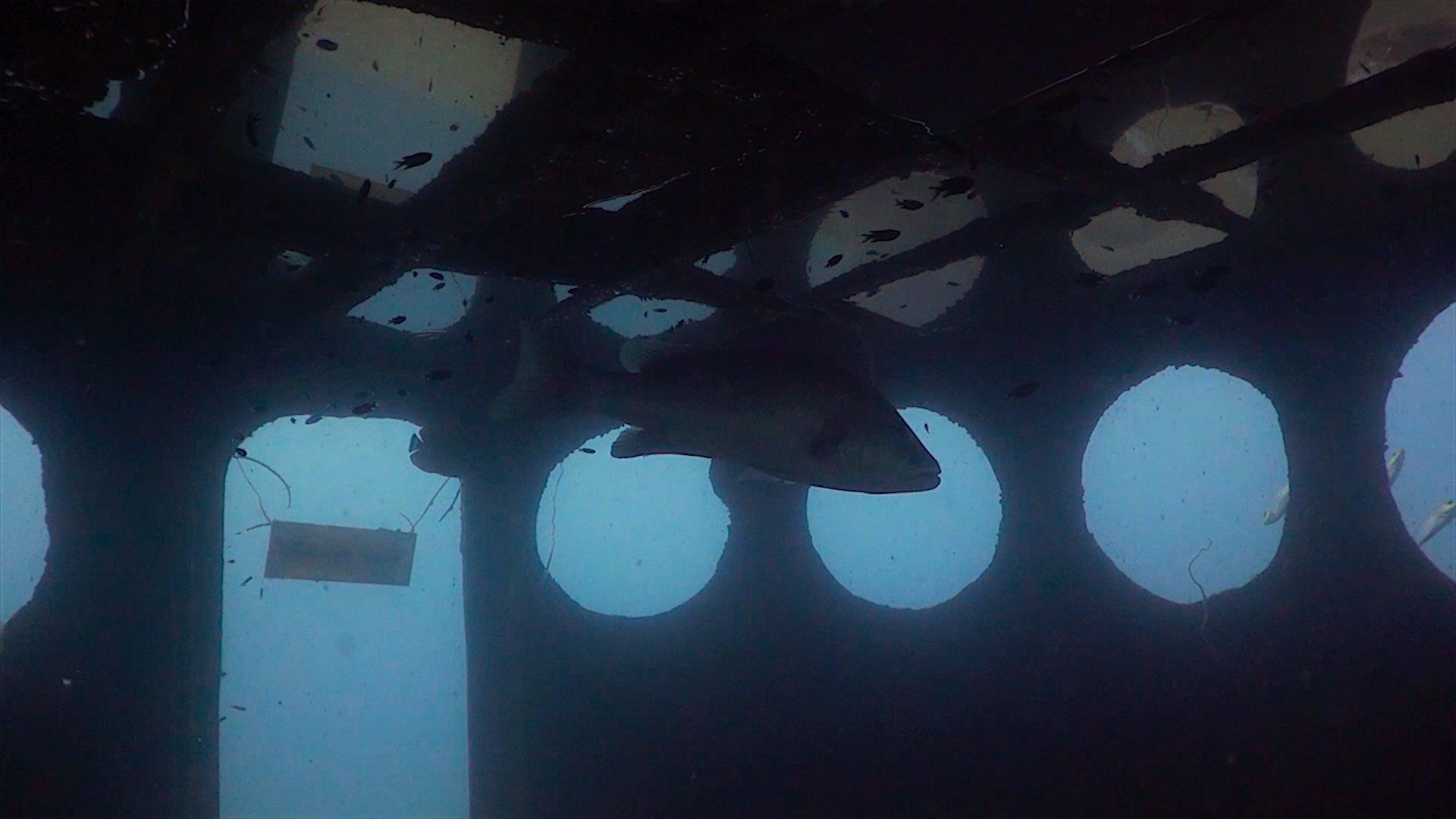 www.thefunkyturtle.com htms sattakut wreck dive koh tao wreck inside