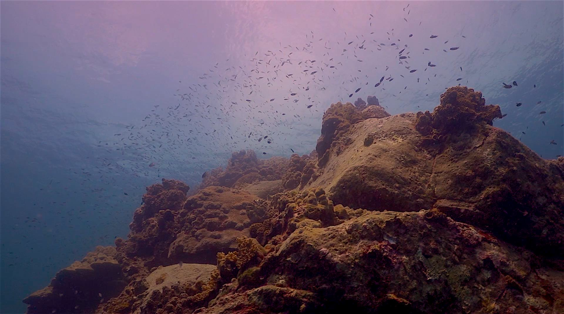 www.thefunkyturtle.com japanese gardens dive site koh tao coral formations