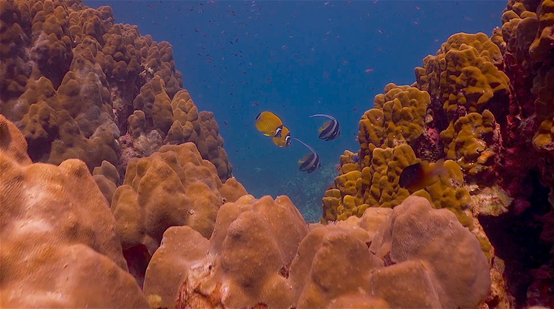 www.thefunkyturtle.com japanese gardens dive site koh tao corals