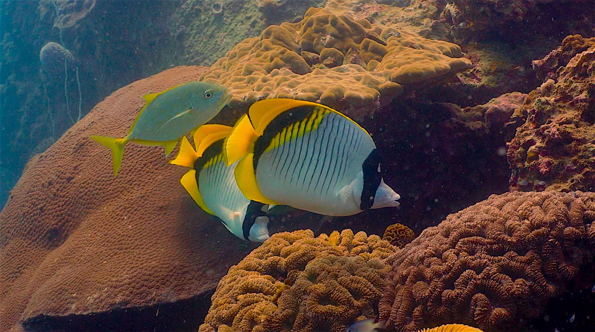 www.thefunkyturtle.com japanese gardens dive site koh tao fish species