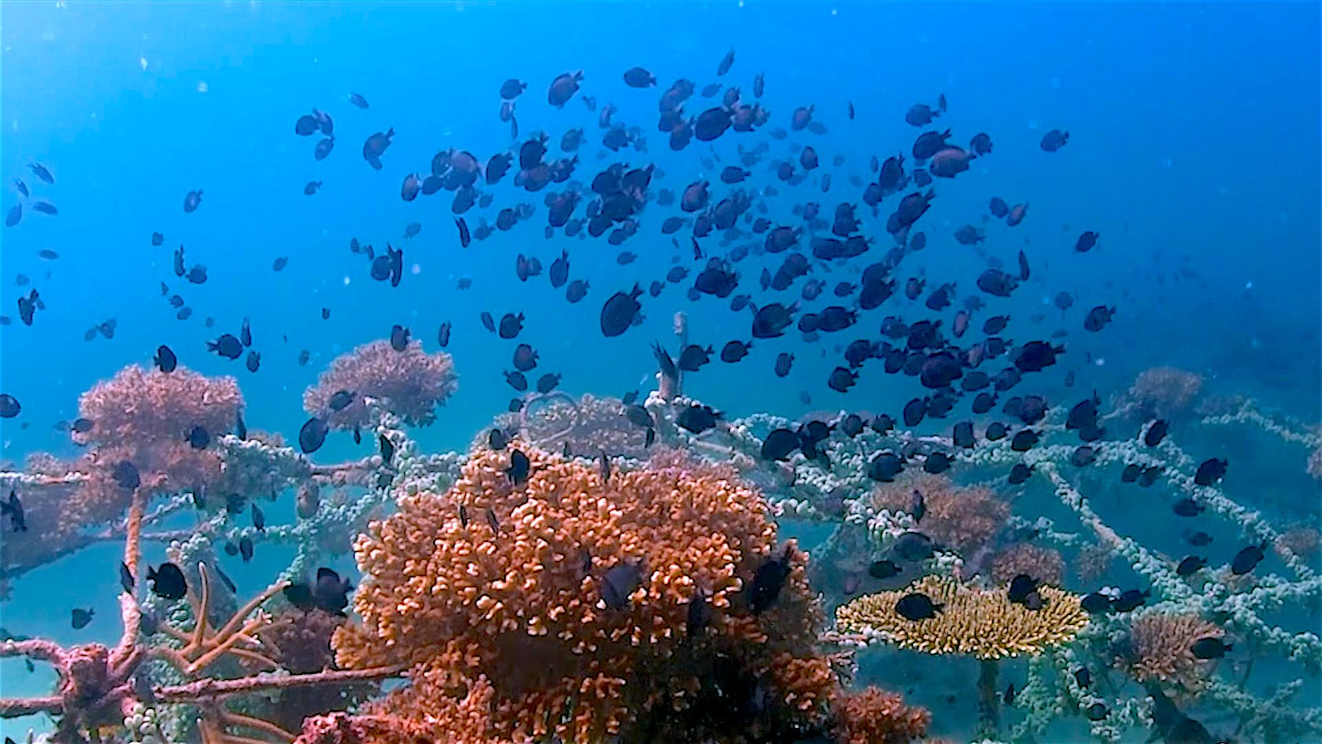 www.thefunkyturtle.com junkyard reef artificial dive site koh tao