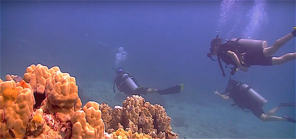www.thefunkyturtle.com adventure diver thailand