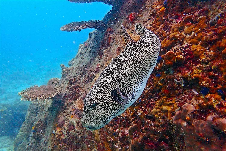 www.thefunkyturtle.com best scuba diving koh tao