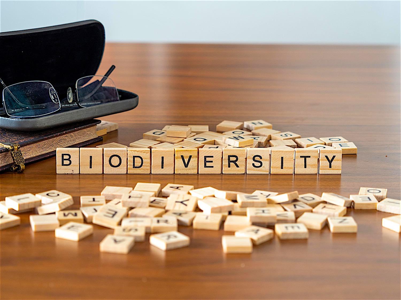 www.thefunkyturtle.com-biodiversity-on-koh-tao