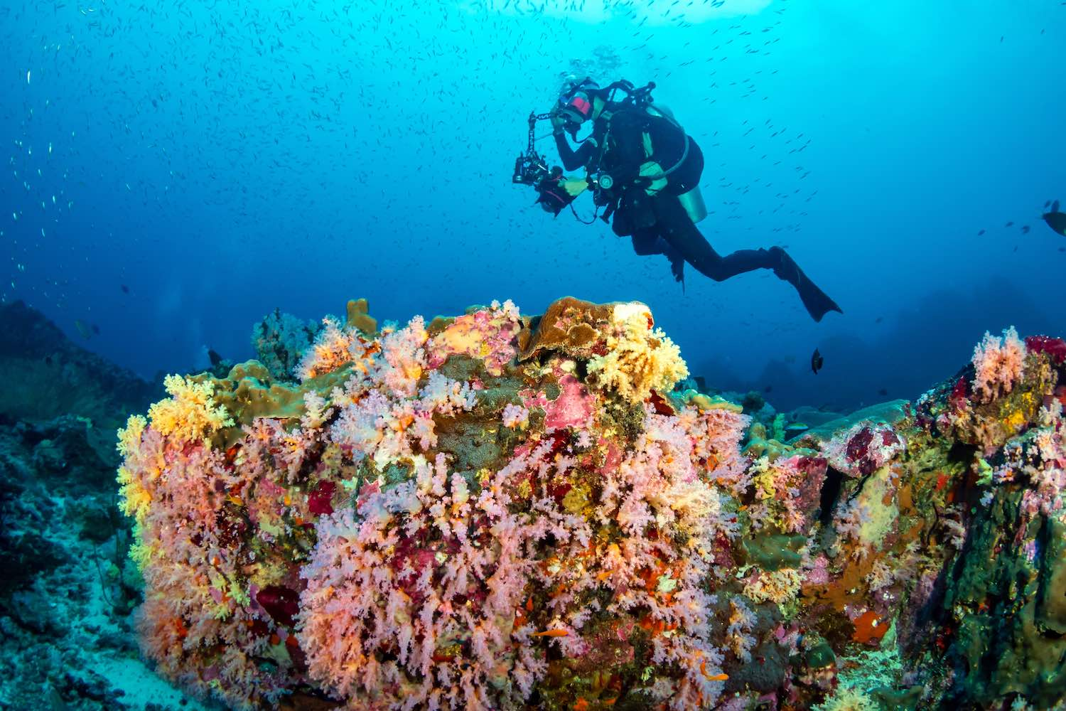 www.thefunkyturtle.com-coral-reefs-conservation-on-koh-tao