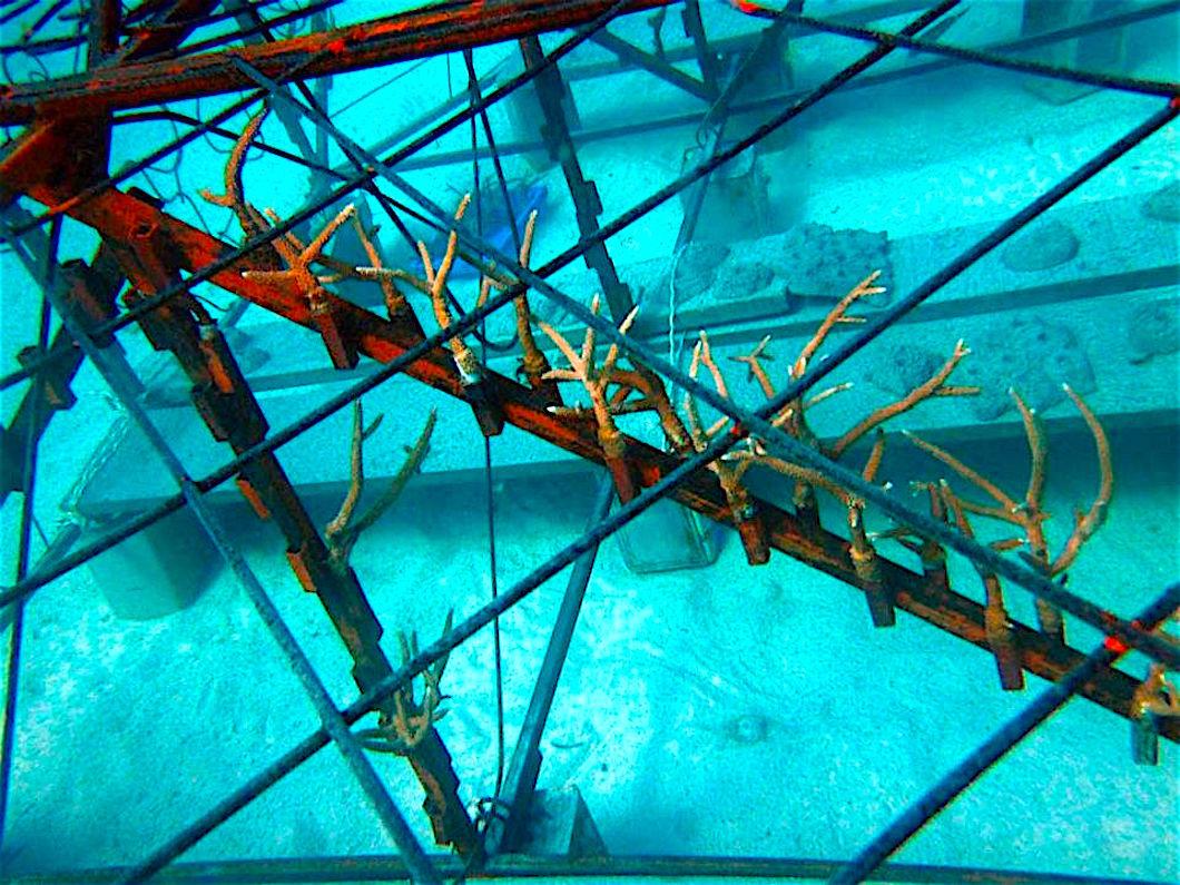 www.thefunkyturtle.com coral restoration initiative koh tao