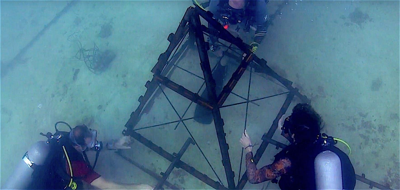www.thefunkyturtle.com coral restoraton koh tao