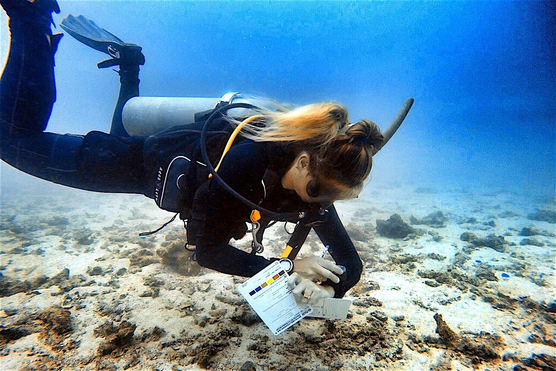 www.thefunkyturtle.com deep adventure diver