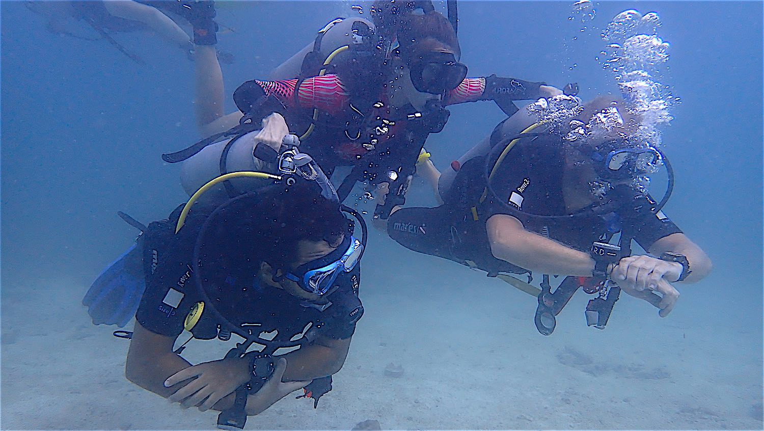 www.thefunkyturtle.com discover scuba diving for beginners