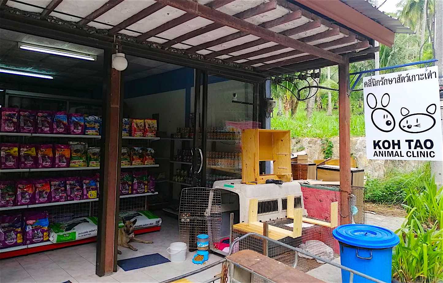 www.thefunkyturtle.com koh tao animal clinic thailand