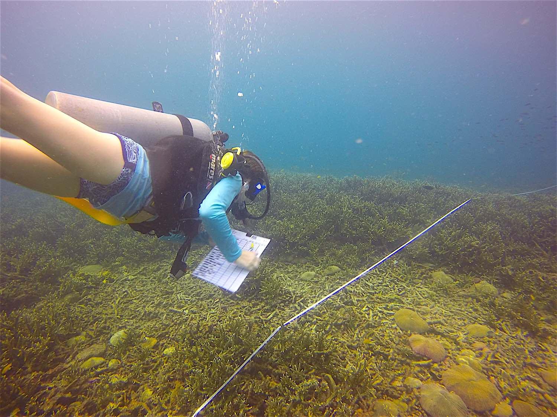 www.thefunkyturtle.com koh tao reef check surveys emp