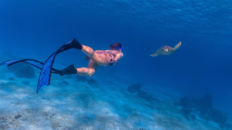 www.thefunkyturtle.com-marine-life-interaction-koh-tao