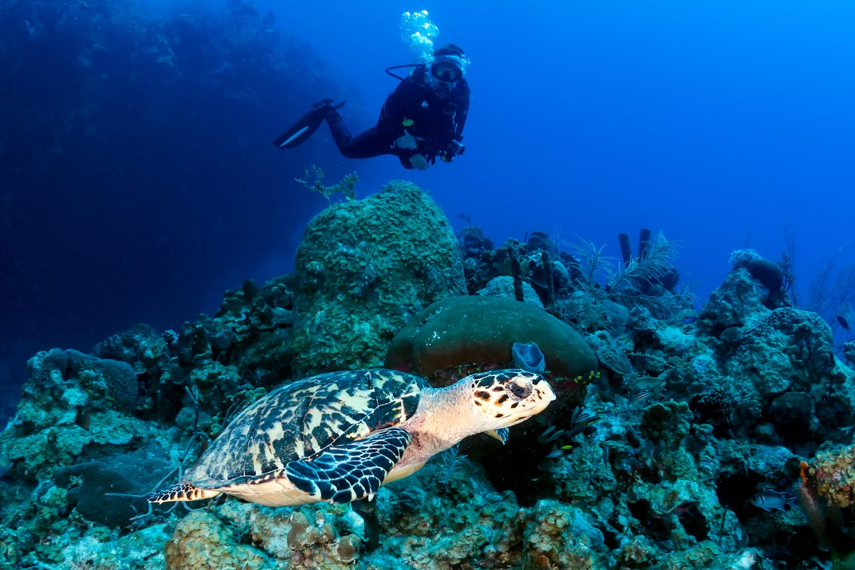 www.thefunkyturtle.com-marine-life-interaction-turtle-koh-tao