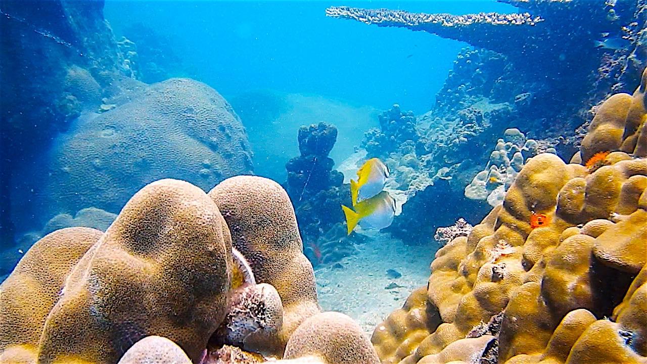 www.thefunkyturtle.com marine life on koh tao