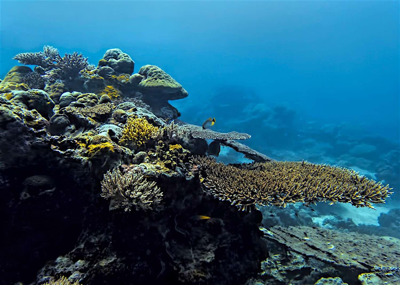 www.thefunkyturtle.com-marine-resource-managemen