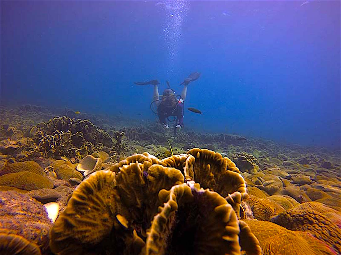 www.thefunkyturtle.com reef check surveys emp