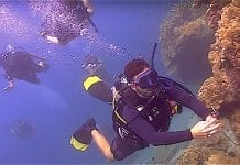 thefunkyturtle.com scuba diving beginners course