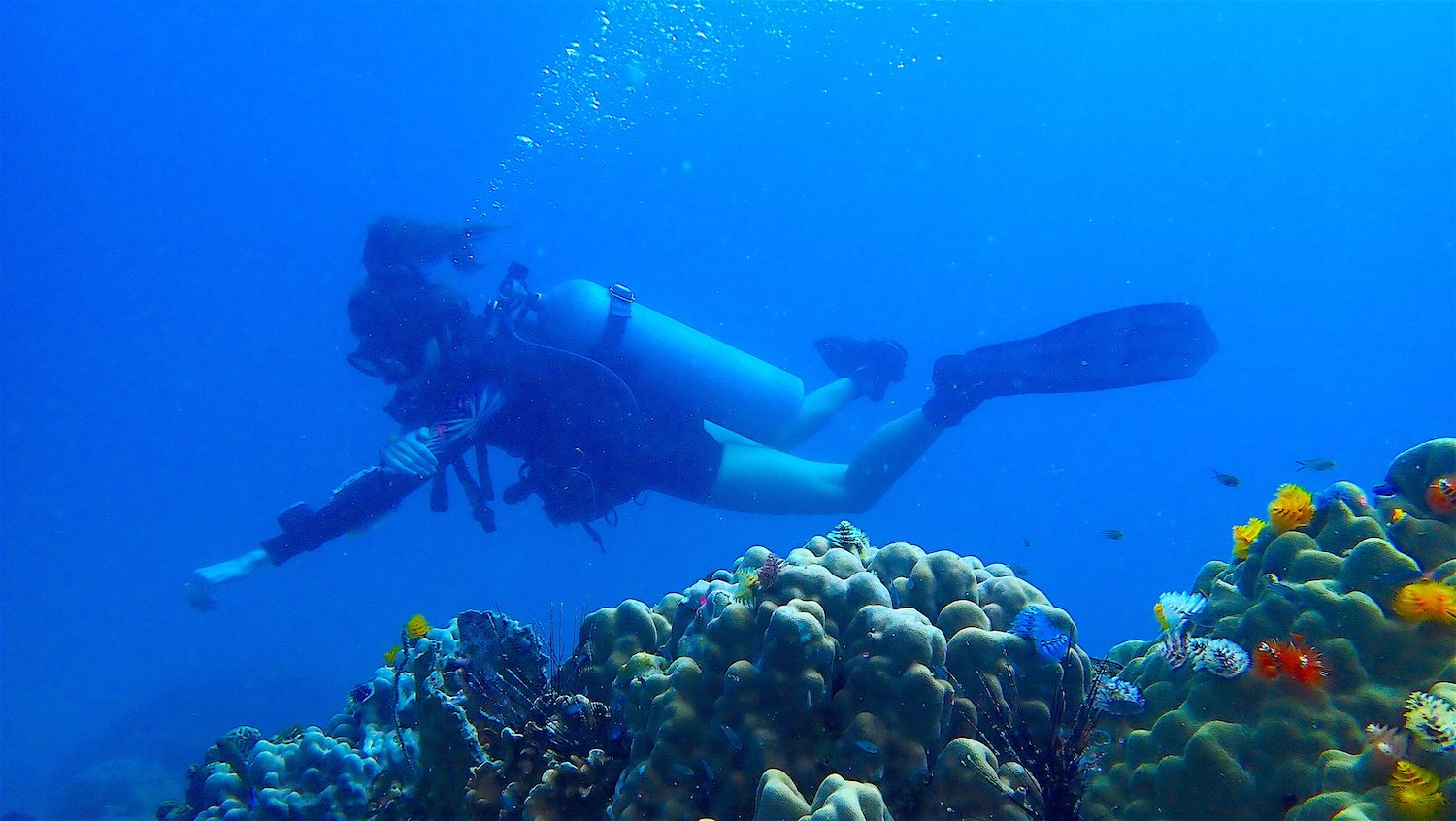 www.thefunkyturtle.com scuba diving courses on koh tao