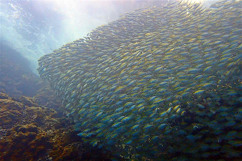 www.thefunkyturtle.com scuba diving marine life koh tao