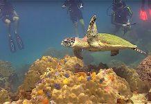 thefunkyturtle.com sea turtles fun diving koh tao