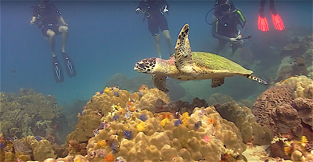 www.thefunkyturtle.com sea turtles fun diving koh tao