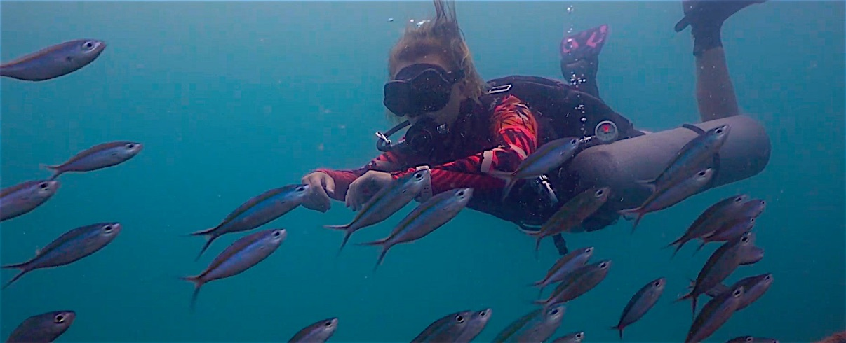 www.thefunkyturtle.com sidemount diving koh tao