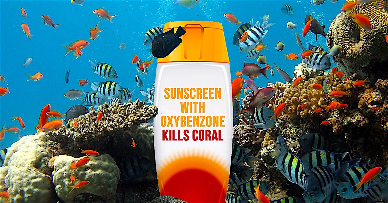 www.thefunkyturtle.com suncreen and coral reefs