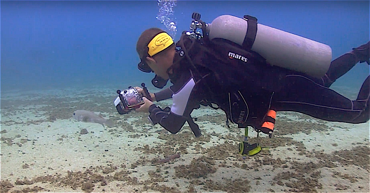 www.thefunkyturtle.com underwater videography specialty koh tao
