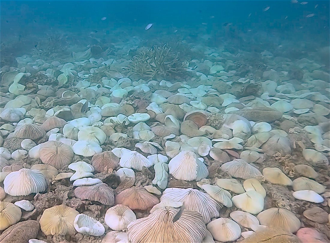 www.thefunkyturtle.com coral bleaching events