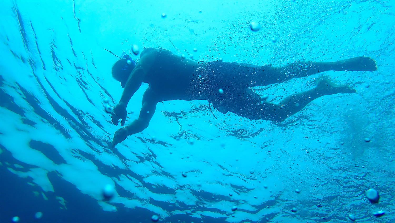 www.thefunkyturtle.com half day snorkeling trip