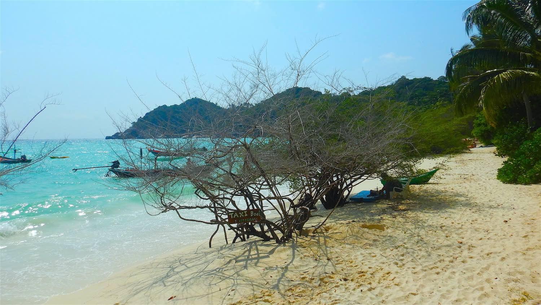 www.thefunkyturtle.com shark Bay Koh Tao Thailand
