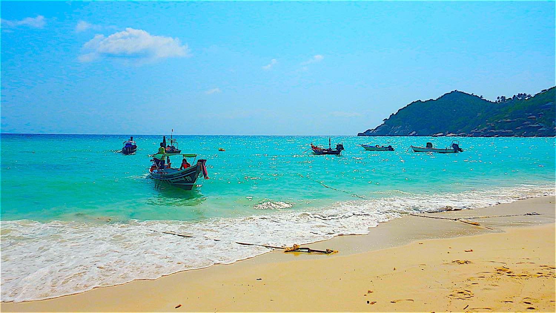 www.thefunkyturtle.com shark Bay Thailand