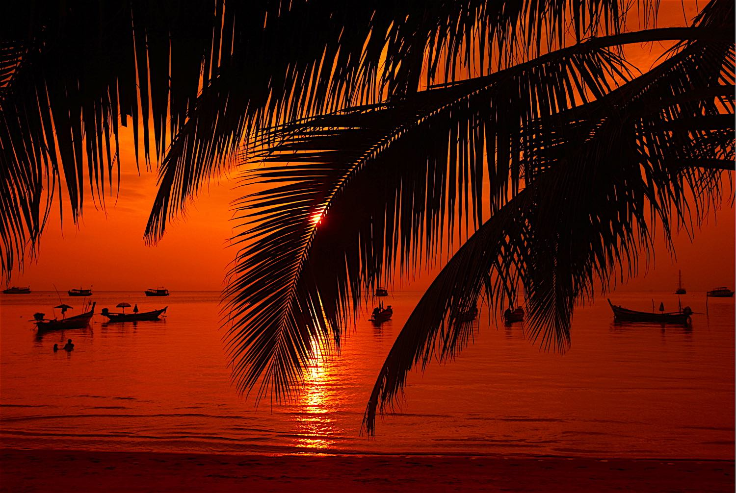 www.thefunkyturtle.com-sunset-on-koh-tao-palm-trees