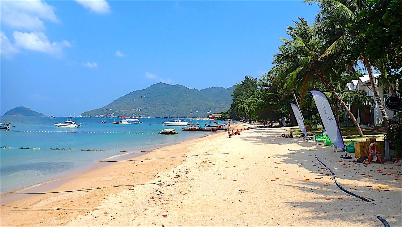 www.thefunkyturtle.com restaurants on mae haad beach koh tao thailand