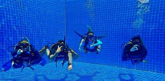 thefunkyturtle.com best divemaster course koh tao