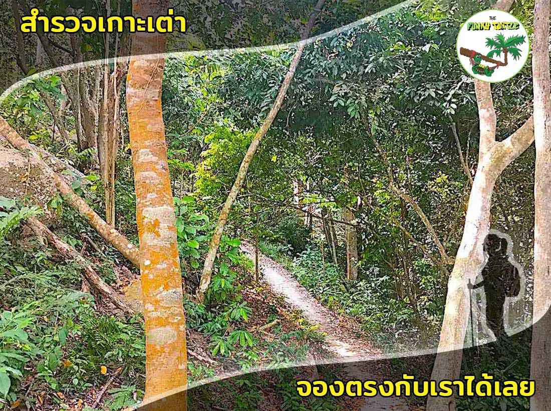Best Hiking Trails on Koh Tao