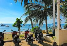 thefunkyturtle.com cheap scooter rental koh tao